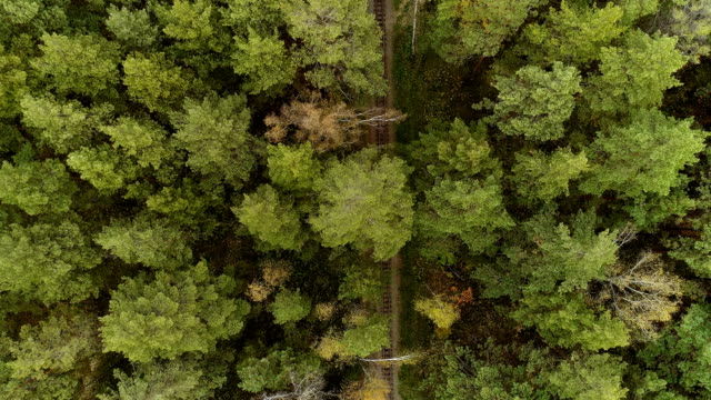 Background beautiful green wild forest aerial view video