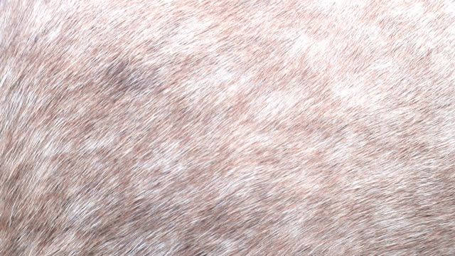 vídeos y material grabado en eventos de stock de fondo para el diseño, la textura de la piel del caballo y del cerdo - peludo
