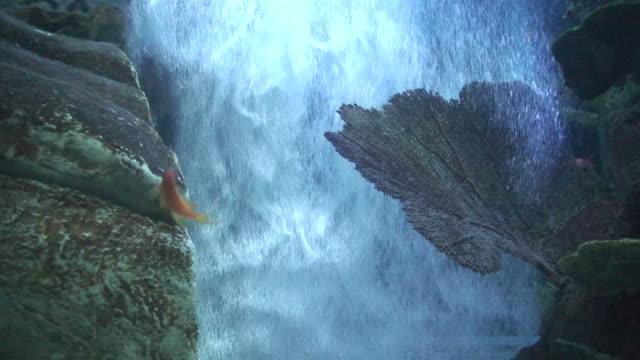 vídeos y material grabado en eventos de stock de fondo de burbujas de salida al mar, primer plano - parte del cuerpo animal