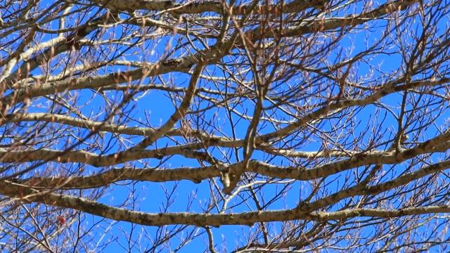 background of branch tree - albero spoglio video stock e b–roll