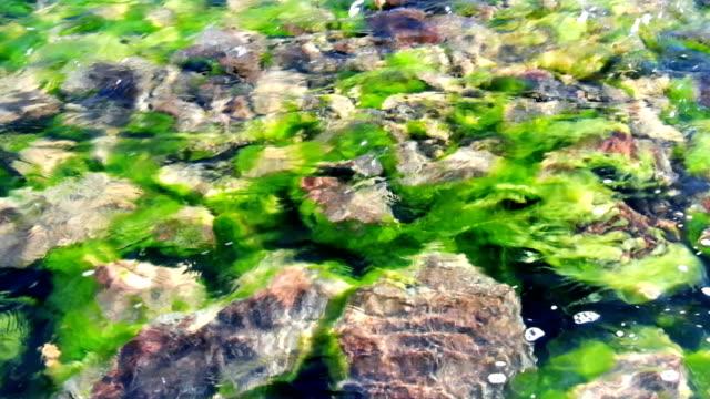 アルタイ山脈の山の川のきれいな純粋な透明な淡水の背景 ビデオ