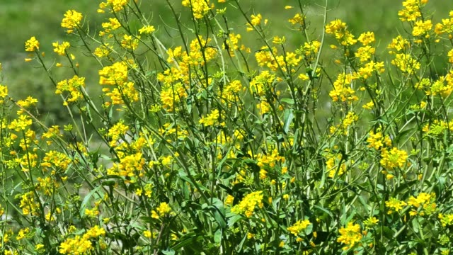 風に揺れる花の背景 - 花壇点の映像素材/bロール