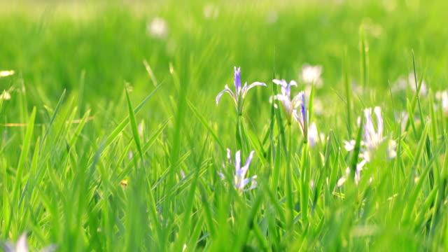 bakgrund av grönt gräs med floret - böngrodd bildbanksvideor och videomaterial från bakom kulisserna