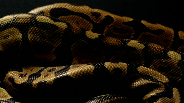 Best Python Stock Videos and Royalty-Free Footage - iStock