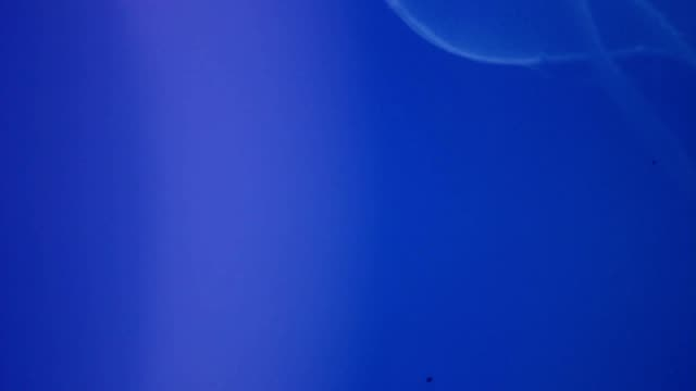 Background of the jellyfish floating in the ocean video