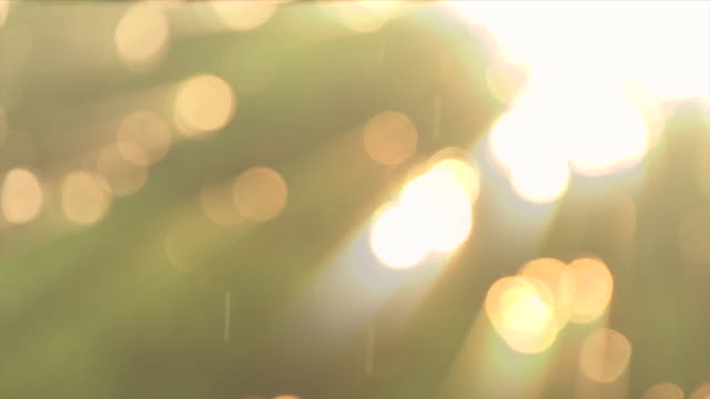 Background With Beautiful Golden Bokeh Circles And Rain Fall Light Ray Slow Motion Loop Able Video of background with beautiful golden bokeh circles and rain fall light ray slow motion loop able. 4K summer background stock videos & royalty-free footage