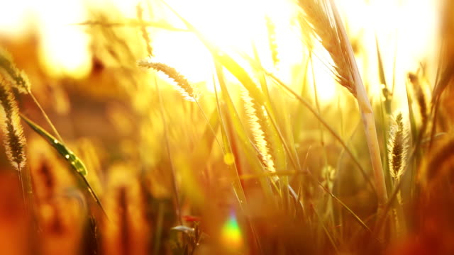 Background with grass and sunshine video