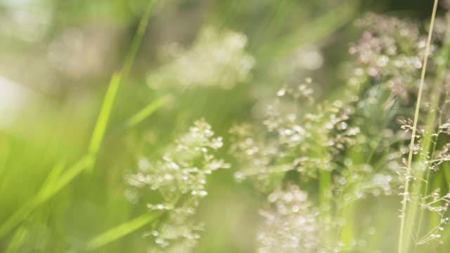 bakgrund med gröna sommaren gräs och solsken - summer sweden bildbanksvideor och videomaterial från bakom kulisserna