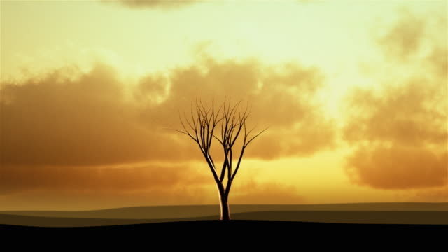 Background with tree growing at sunset. Object  in the middle. video