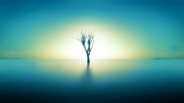 Background with tree growing, sunset, reflection in water. Blue toned. video