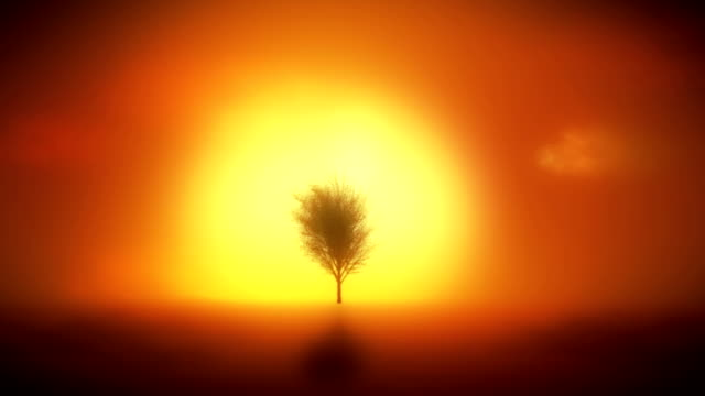 background with tree growing, sunset, reflection in water. - frugal lifestyle stock videos and b-roll footage