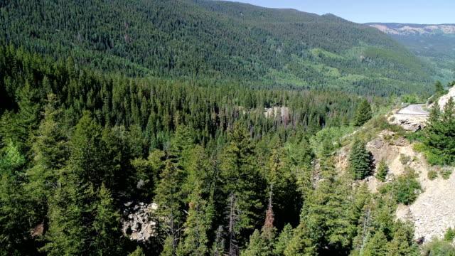 vídeos de stock, filmes e b-roll de suportando através do vale que olha através da floresta enorme da árvore de pinho em colorado - independence pass