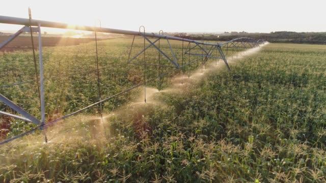4k hinterleuchtete antennenzoom-out-ansicht des centre pivot bewässert eine maisernte auf einem großen gemüsebetrieb - bewässerungsanlage stock-videos und b-roll-filmmaterial