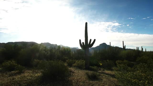 バックライト サグアロ サボテンとアリゾナ州の ajo mnts - オコティロサボテン点の映像素材/bロール