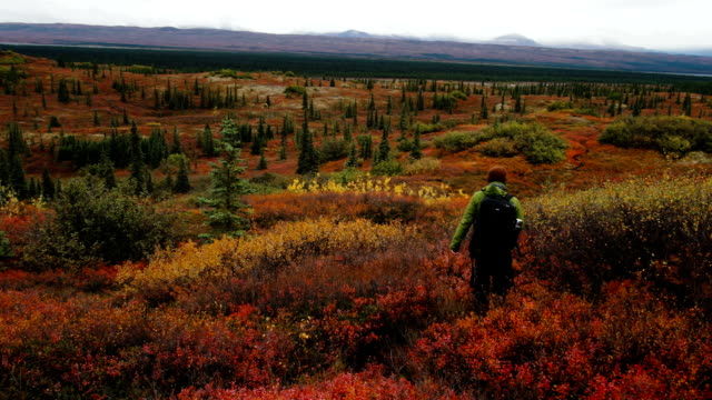 backpacker walks into the tundra wilderness