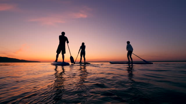 Backside view of young people paddleboarding at sunset video