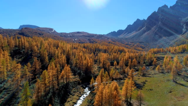 backward aerial over alpine mountain valley and orange larch forest woods in sunny autumn.Europe Alps outdoor colorful nature scape mountains wild fall establisher.4k drone flight establishing shot video