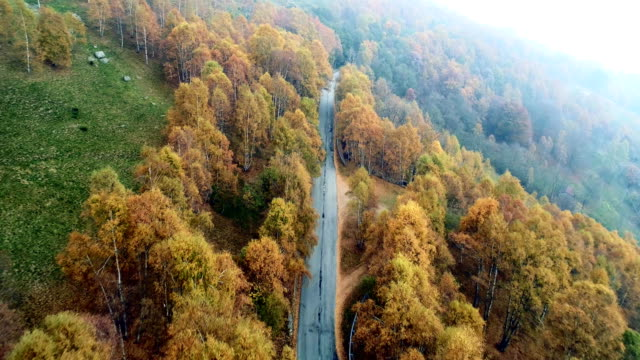 Backward aerial top view over road in colorful countryside autumn forest.Fall orange,green,yellow red tree woods.Mountains street path establisher.4k drone flight straight-down establishing shot video
