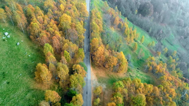 Backward discover aerial top view over road in colorful countryside autumn forest.Fall orange,green,yellow red tree woods.Fog street path establisher.4k drone flight straight-down establishing shot video