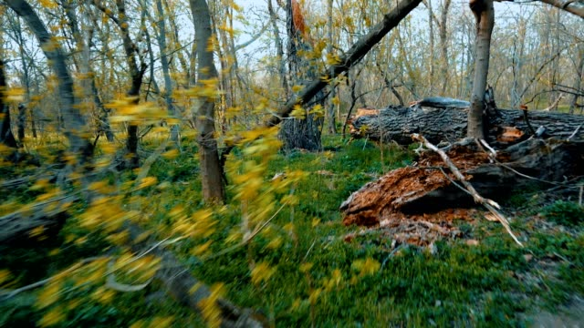 backward movement  through a forest with broken trees - albero caduto video stock e b–roll
