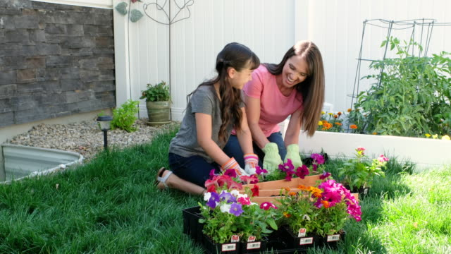 Backyard Gardening Backyard gardening with a mother and daughter. ornamental garden stock videos & royalty-free footage
