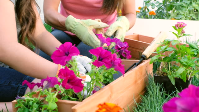 backyard gardening - spring stock videos & royalty-free footage