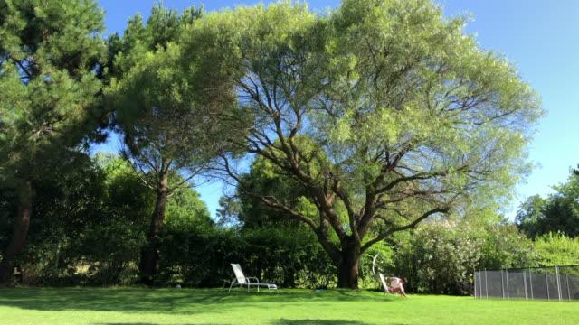 giardino di casa cortile con grande albero - giardino domestico video stock e b–roll