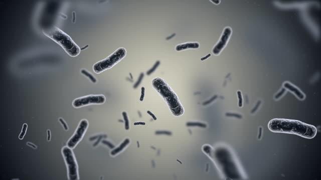 Bacteria Animation video