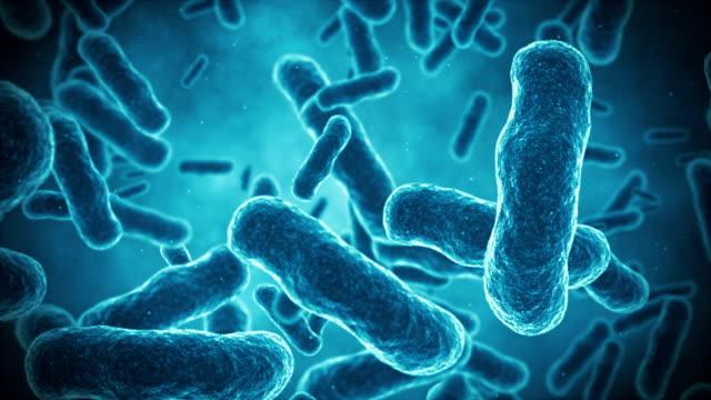 vídeos y material grabado en eventos de stock de las bacterias animaton - bacteria