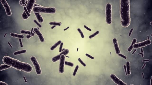Bacteria Animaton video