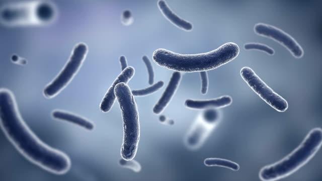 vídeos y material grabado en eventos de stock de bacterias visto con microscopio de electrones. hd - bacteria