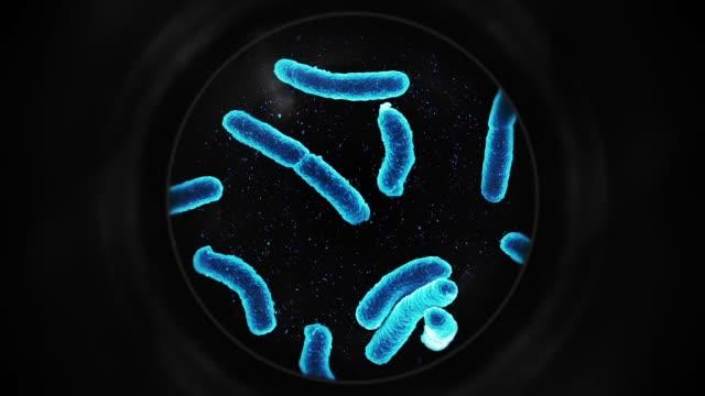 bakterier under ett mikroskop - blå - microscope bildbanksvideor och videomaterial från bakom kulisserna