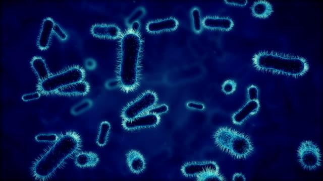 Bacteria under microscope blue video