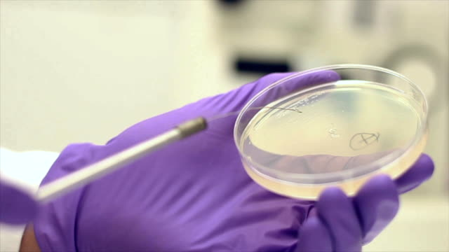 Bacterial Streak Out video