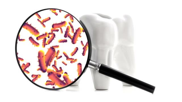 vídeos de stock e filmes b-roll de bacterias and viruses around tooth - boca suja