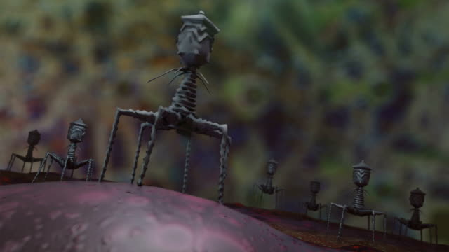 Bacteriophage virus video