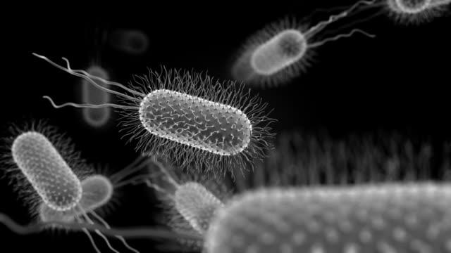 Bacterium Medical Background