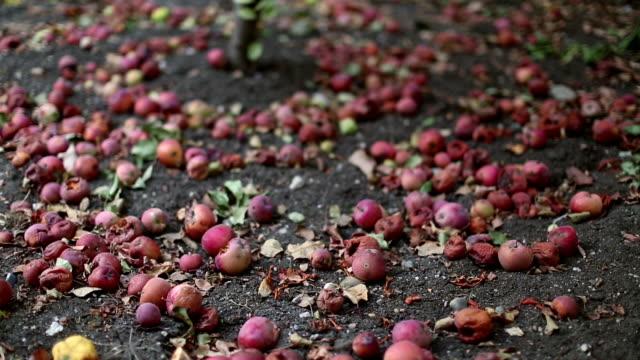 schlechte äpfel - verfault stock-videos und b-roll-filmmaterial