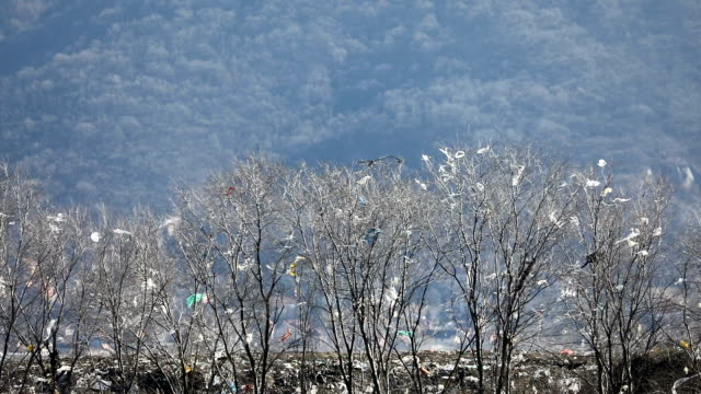 Bags and trash on the branches of trees