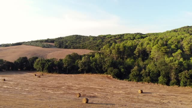 Bails of hay lay in a farmers field ready to be collected. Lush green trees grow in a dense forest surrounding the farm land in Italy