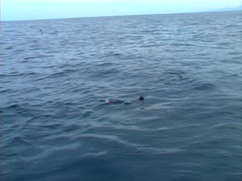 Baja fishing Marlin 01 video