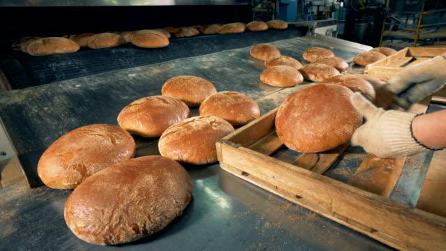 Baker met le pain frais sur le plateau. - Vidéo