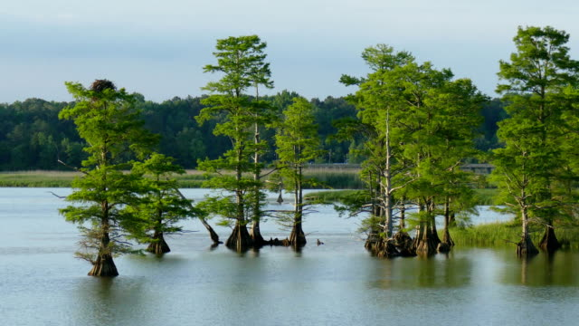 Bald cyprus trees Sandy Bay James River Colonial NHP Colonial Parkway vehicles Virginia video