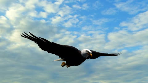 Bald Eagle Flight in the sky - Close-Up Bald Eagle Flight in the sky - Close-Up - tracking shot flying stock videos & royalty-free footage