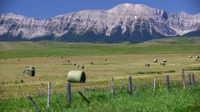 Bale Rolled Hay Field Alberta Bale of hay in a field with the Canadian Rockies in the background near Lundbreck, Alberta, Canada. prairie stock videos & royalty-free footage
