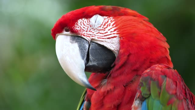 stockvideo's en b-roll-footage met bali bird park - snavel