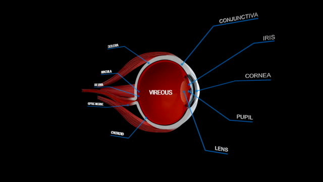 EYE Ball Anatomy Detail video