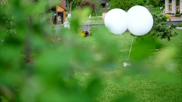 balloons in the yard.the wind blows the balls. trees, house. wedding ceremony, nature - powojnik filmów i materiałów b-roll