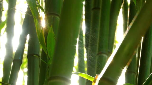 bamboo and sun