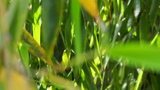 竹の背景 - 笹点の映像素材/bロール